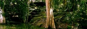 Swamp ta Prohm
