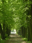czerniejewo park alley
