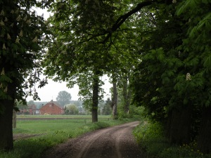 chesnut road
