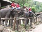 Elephants Chiang Mai