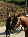 Horses Cuba